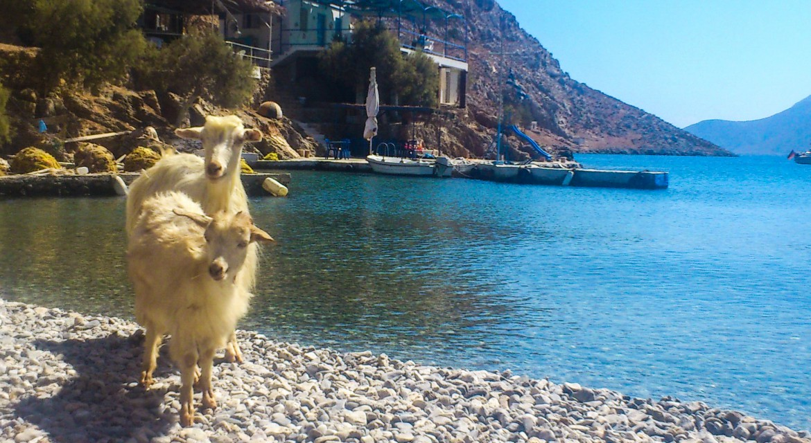 Palionisos | Goats and Sea